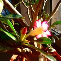 Photo de profil de Débatteur Tarzan